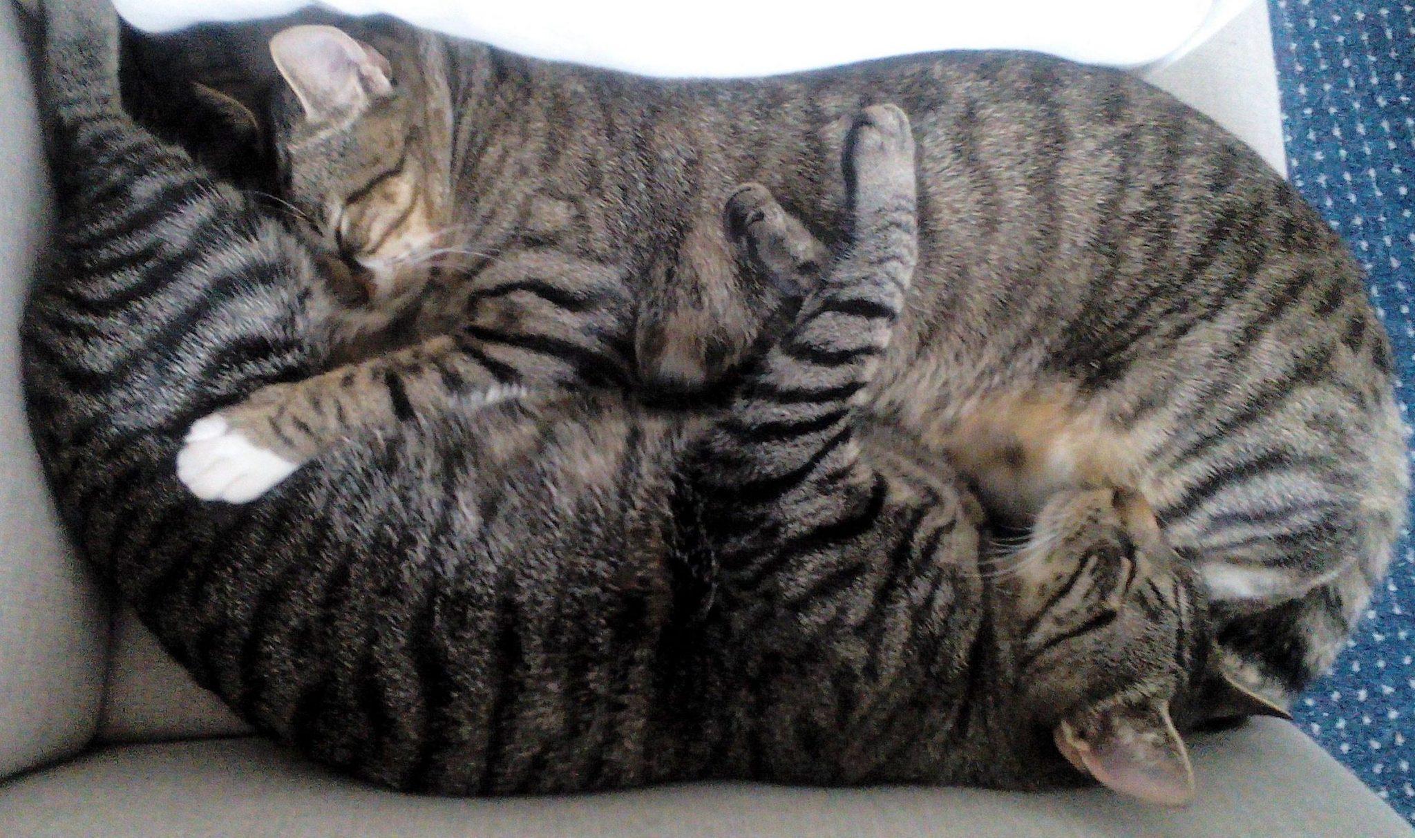 Unsere Katzen total entspannt