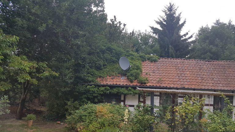 Garten II 768x432 - Noch-alles-Wildnis